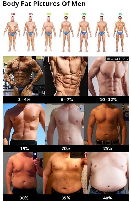 平均体脂肪率 男