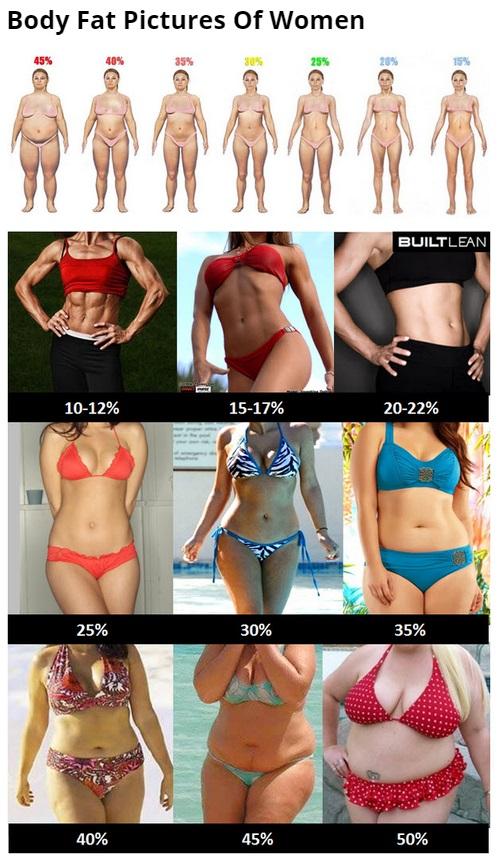平均体脂肪率 女
