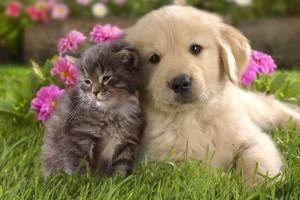 犬猫フリー画像[1]